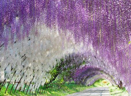 Magical and Enchanting Japan