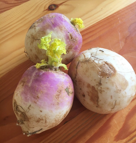 Turnips and Grief