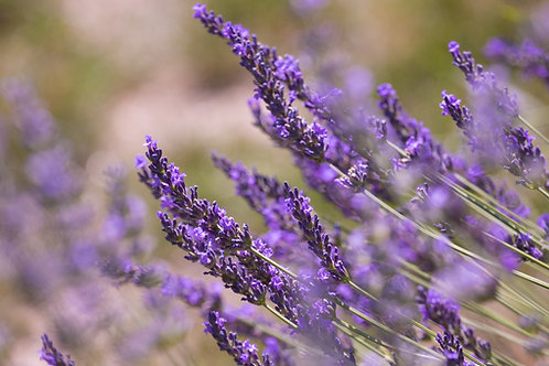 Lavender Essential Oil - 15 mL