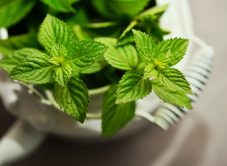How to Essential: Peppermint