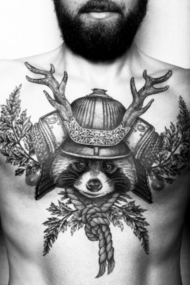 raton laveur poitrine - chest racoon