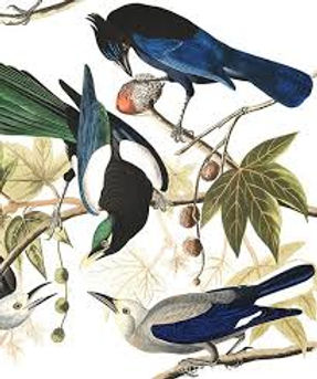 Magpies Branch.jpg