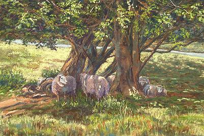 sheep_in_shade800.jpg