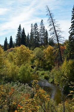 Waskasoo Creek