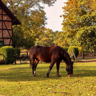 horsefarm-eco.jpg