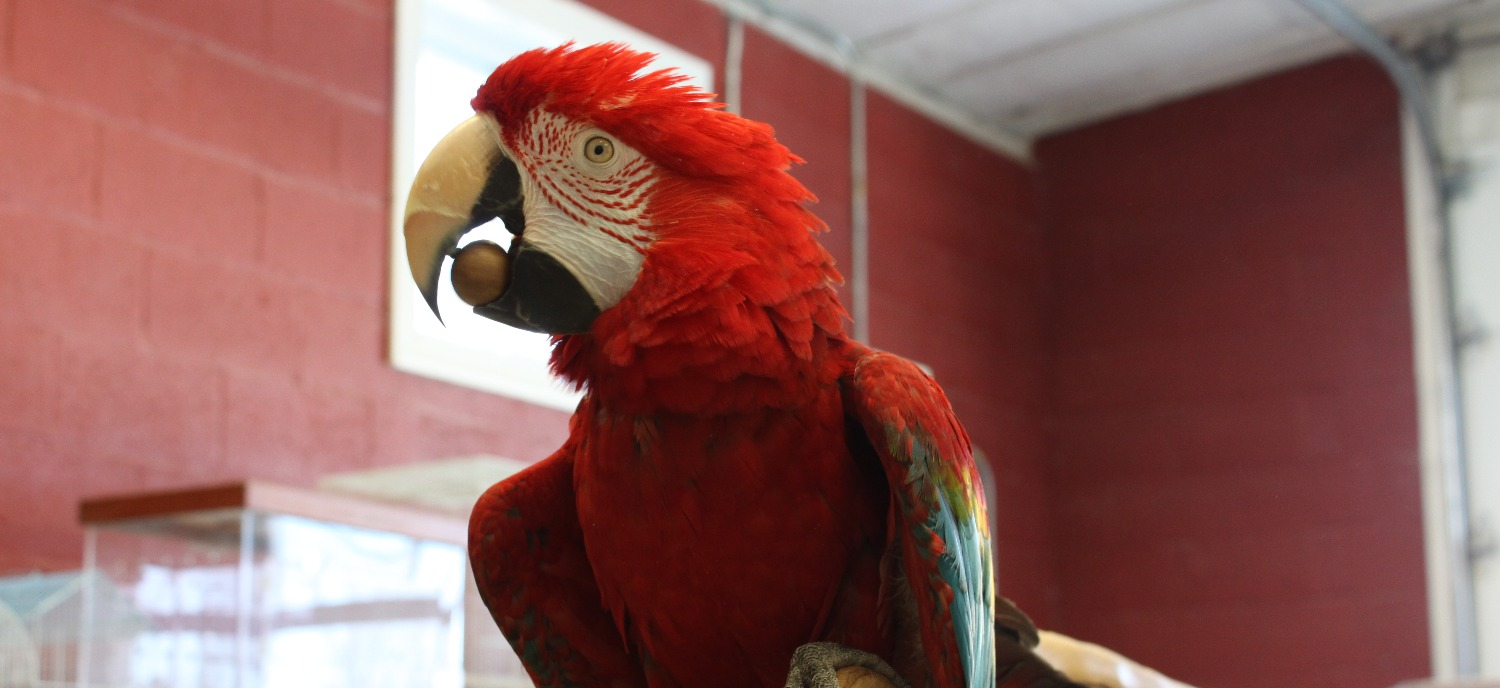 Hand-Raised Exotic Birds - Greenbrook NJ - Parrots for Sale