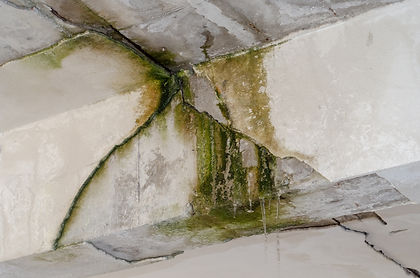 Canva - restoration dangers mold in hous