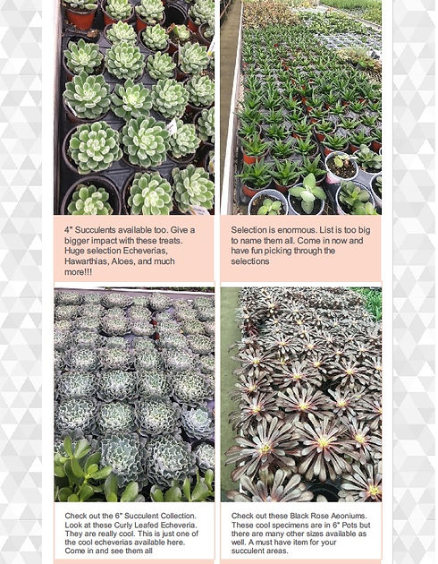 succulent page 1.jpg