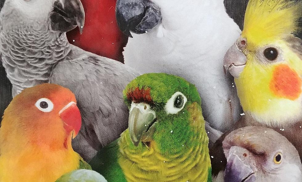Bird Deposit $25-$3000