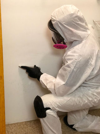 Technician performing mold  removal