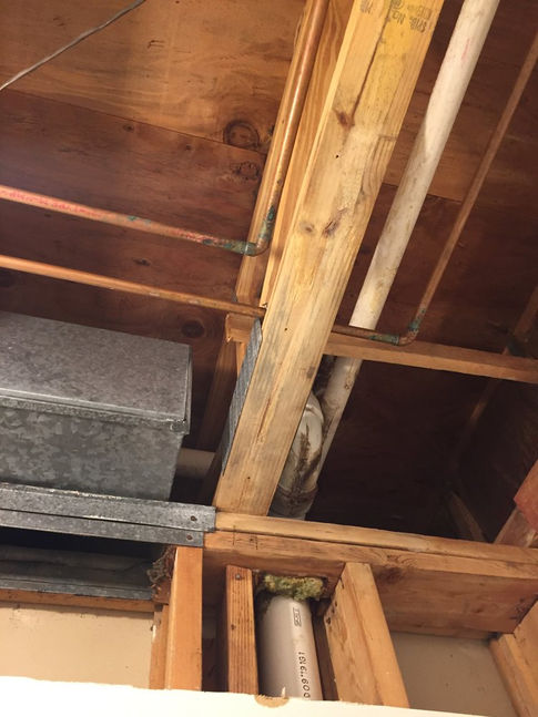 black mold in wood