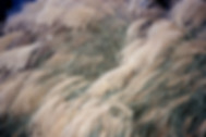 seedy-grass2.jpg