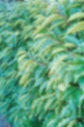 fullsizeoutput_93d_edited.jpg