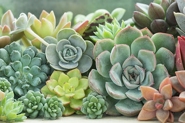 Various Type of Succulent Flowering Hous