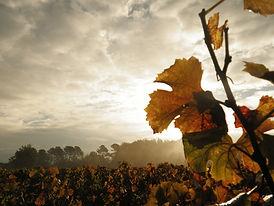 Vente de vin visite et dégustation
