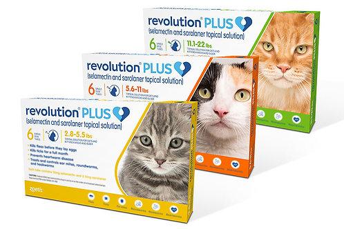 Revolution Plus Felino