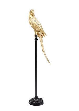 Harry Le Perroquet sur pied