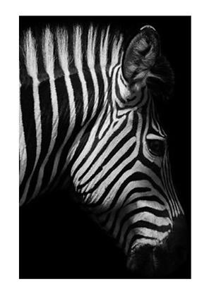 instagram SKDéco skdecoshop skdeco objet de decoration design designer tableau toile animal jungle nature noir et blanc zebre