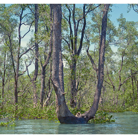 Flooded_Forest # 2