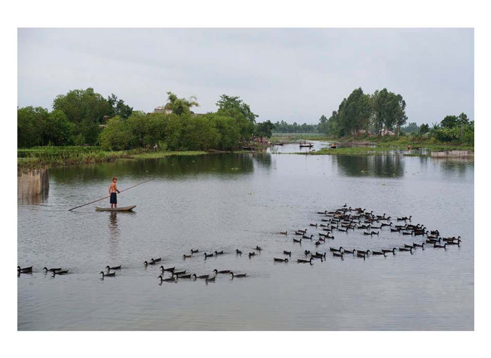 Duck Ponds  Lạng Phong Nho Quan District Ninh Bình Province #1