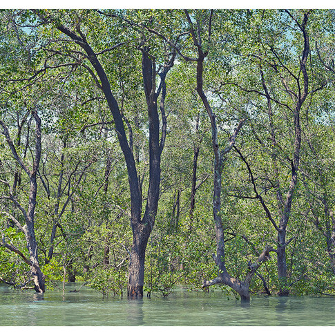 Flooded_Forest # 6