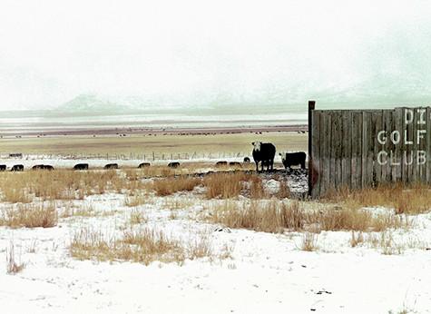Cows.  Idaho