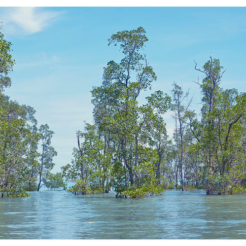 Flooded_Forest # 7