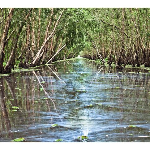Swamps, East of Cao Lanh, Vietnam