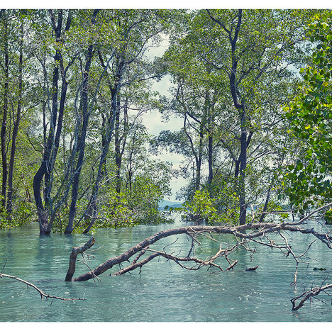 Flooded_Forest # 9
