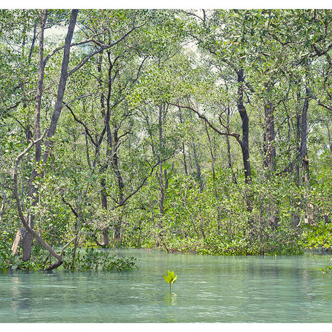 Flooded_Forest # 11