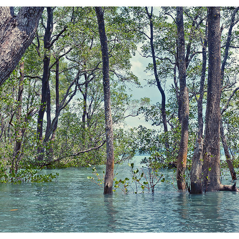 Flooded_Forest # 12