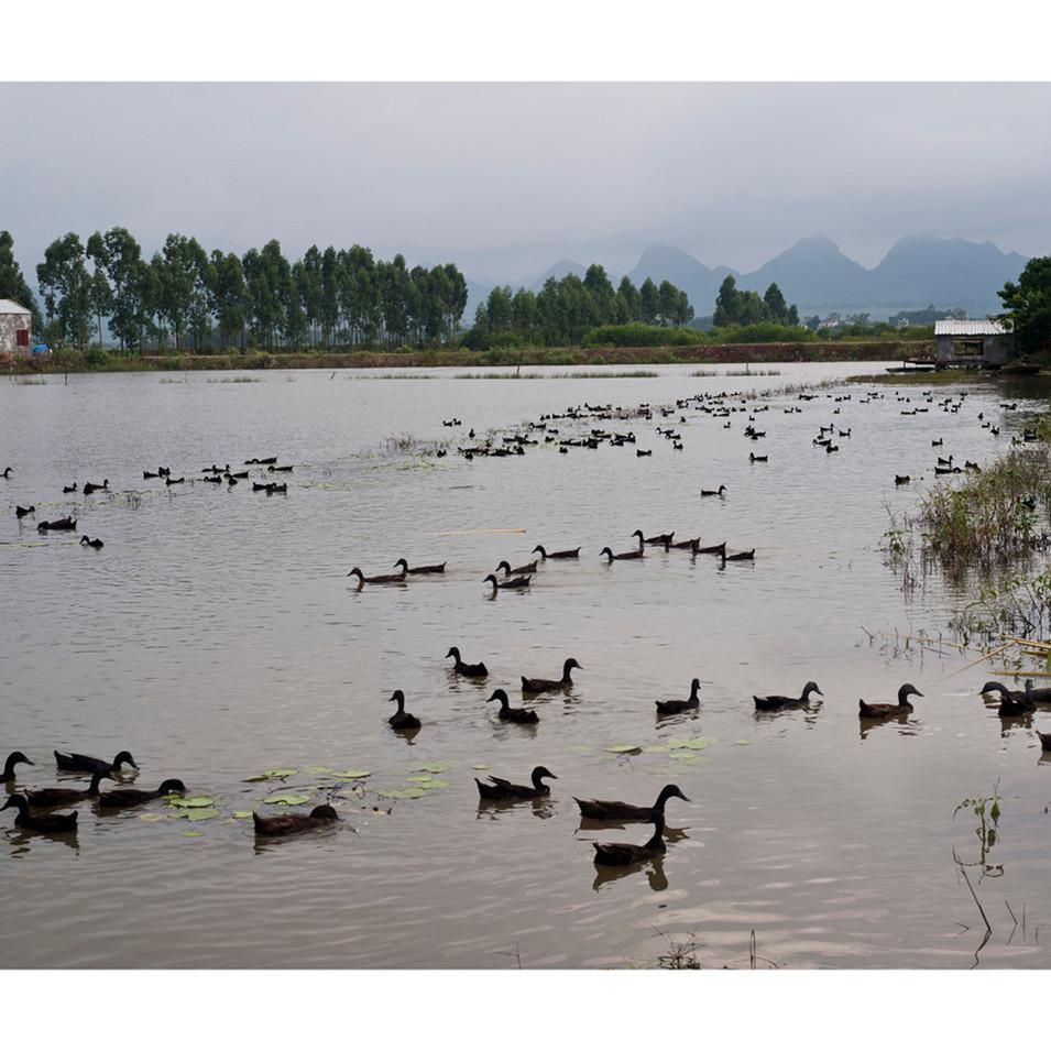 Duck Ponds  Lạng Phong Nho Quan District Ninh Bình Province #2