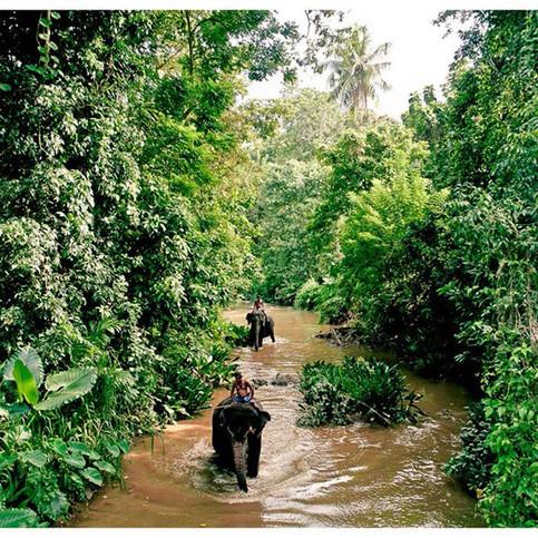Mahout. Maha Oya River