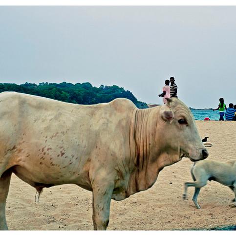 Trincomalee # 2