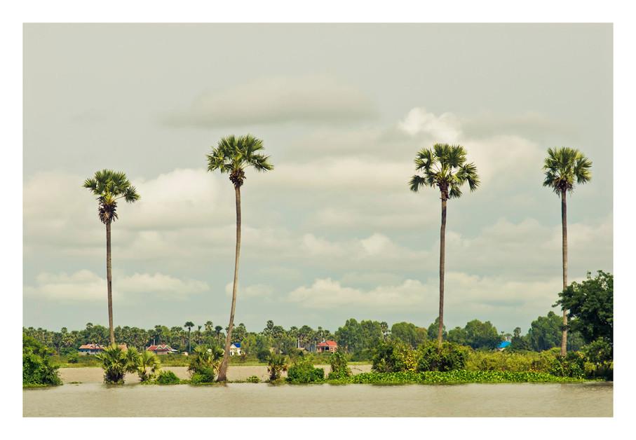 Sugar Palms, Long Vek, Mekong