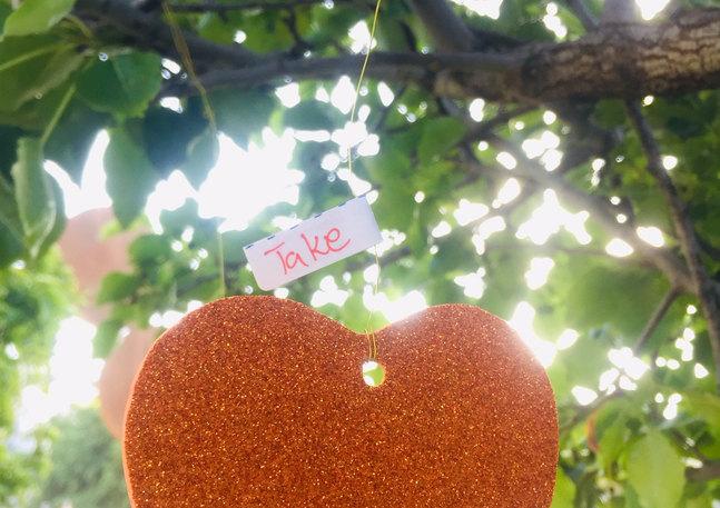 """לבבות בכיכר הבימה - ת""""א"""