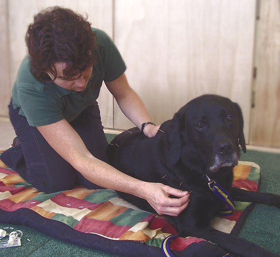 black-dog-accupuncture-action_edited.jpg