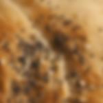 Screenshot 2020-04-03 at 15.32.35.png
