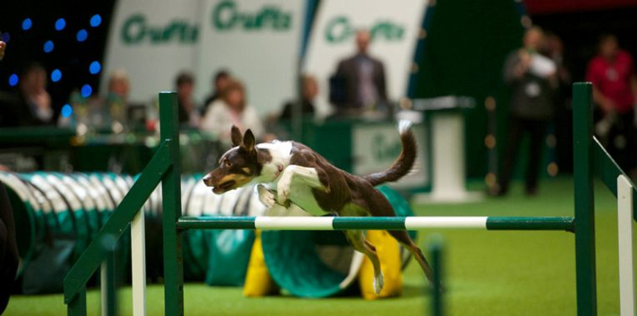 Prof-photo-Crufts-Hayly-jumping-765x380.