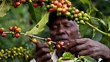 coffee-farmers.jpg