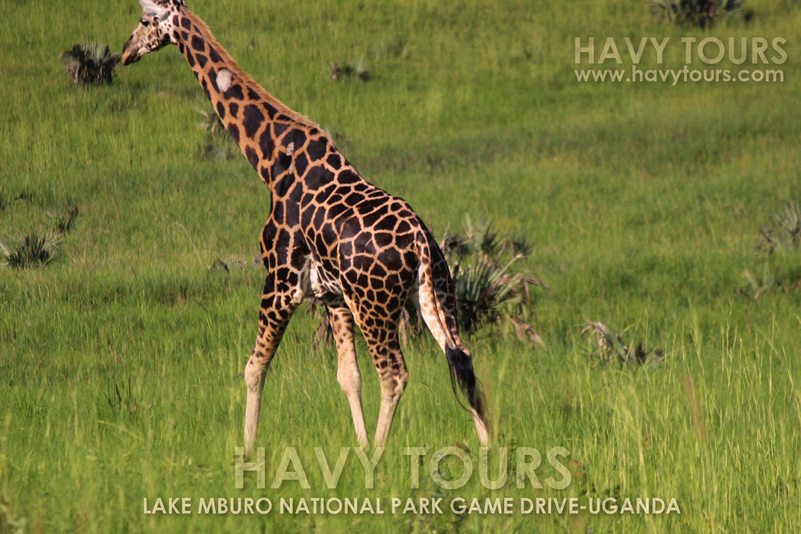 Uganda Havy Tours (100)
