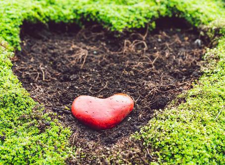 L'ouverture des jardins coeurs