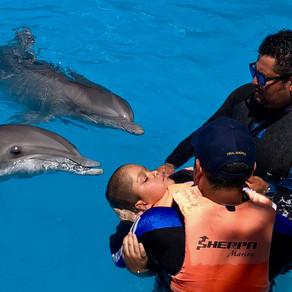 DIF Municipal impulsa sesiones de delfinoterapia de manera gratuita