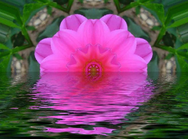 Flower Meditation