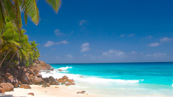 We are shore you will ♥ the Seychelles + Mauritius! (See what we did there?)