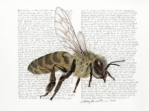 Honey Bee 2, Limited Edition Print