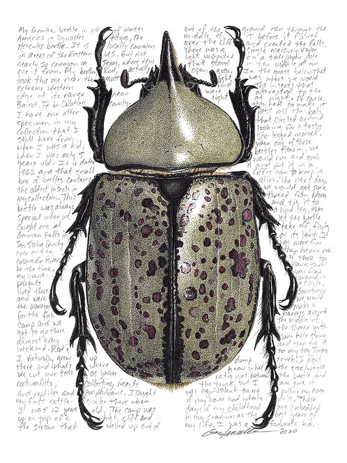 Dynastes tityus, Archival Print