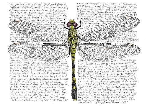 Pond Hawk, Female - Limited Edition Print