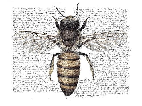 Apis mellifera, European Honey Bee, Limited Edtion Print