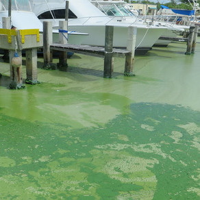 Figure out how to cheaply fix algae blooms and win $10 million